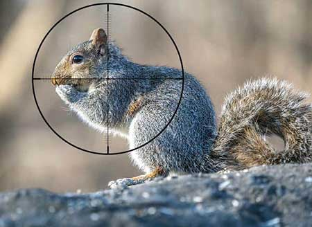 What To Consider Before Buying A Scope For 22lr Squirrel Hunting